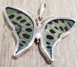 grayish green and black preserved real butterfly wing pendant