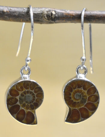 brown ammonite shell fossil and .925 sterling silver drop earrings