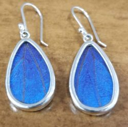 handmade blue butterfly wing and sterling silver earrings