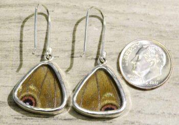 back of blue morpho butterfly wing earrings
