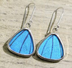 bright blue butterfly wing and sterling silver triangle earrings