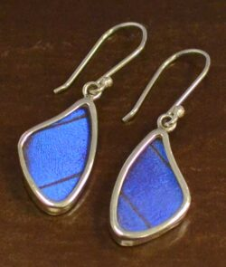blue morpho earrings