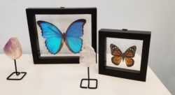 Gemstone and Preserved Butterfly Decor