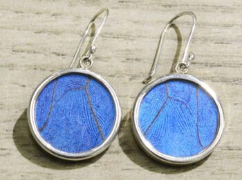 bright blue butterfly wing and sterling silver circle earrings