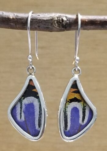 Collage of real butterfly wings earrings