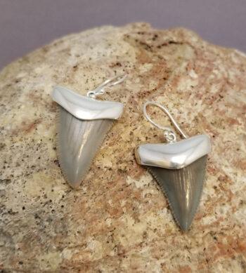 fossil shark teeth earrings