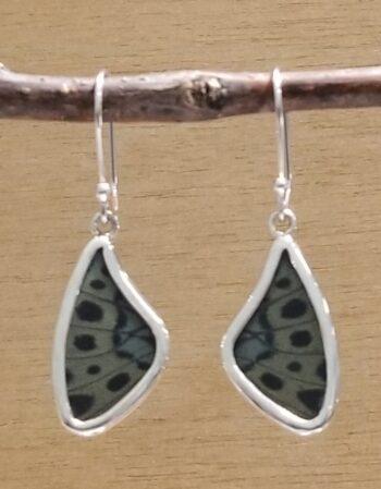 real butterfly wing earrings