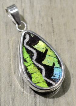 green, black and white striped butterfly wing pendant