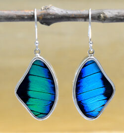 real butterfly wing + sterling silver wing shaped earrings teal and black