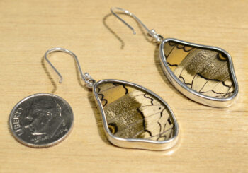 Back of teal and black real butterfly wing + sterling silver wing shaped earrings