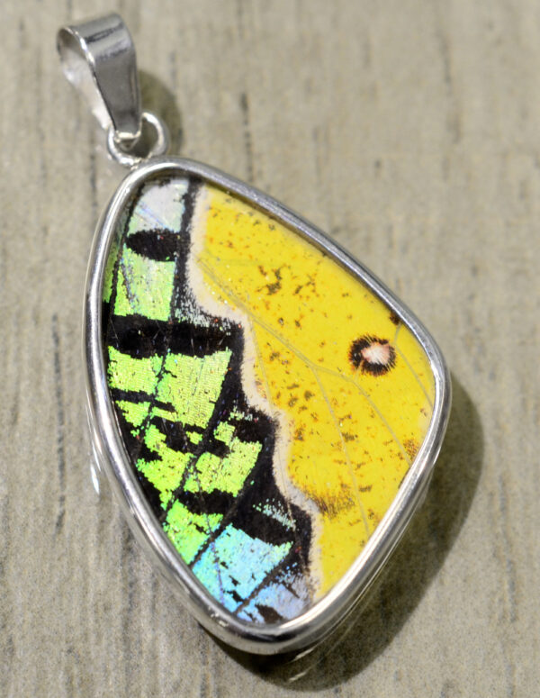 yellow, green, and black real butterfly wing pendant