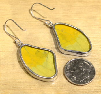 back of yellow and black spotted butterfly wing earrings with dime