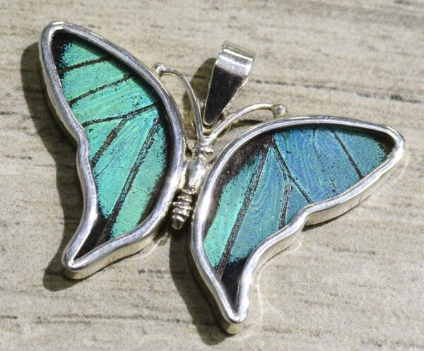 Naturally Expired Real Butterfly Wing Jewelry