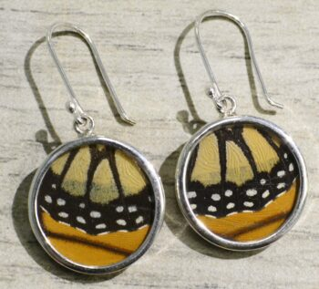 Monarch butterfly wing and sterling silver circle earrings