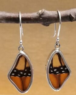Real monarch butterfly wing shape earrings