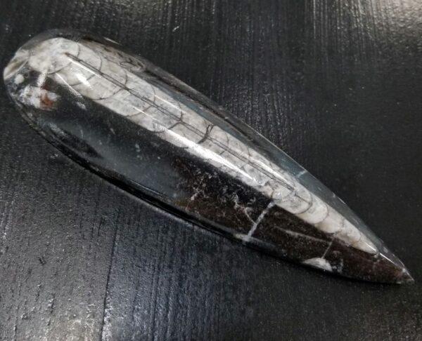 orthoceras fossil decor rock