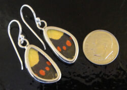 These earrings feature genuine butterfly wings collected after the butterflies have lived a natural life (shown with dime for scale).