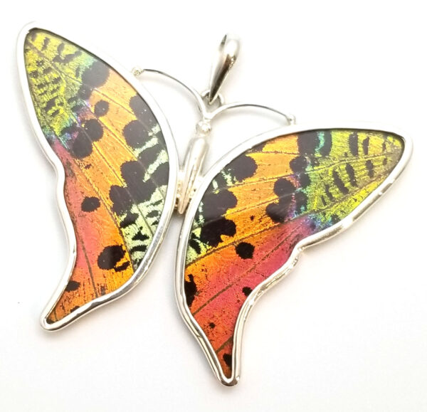 butterfly shaped pendant with naturally expired real sunset moth pendant