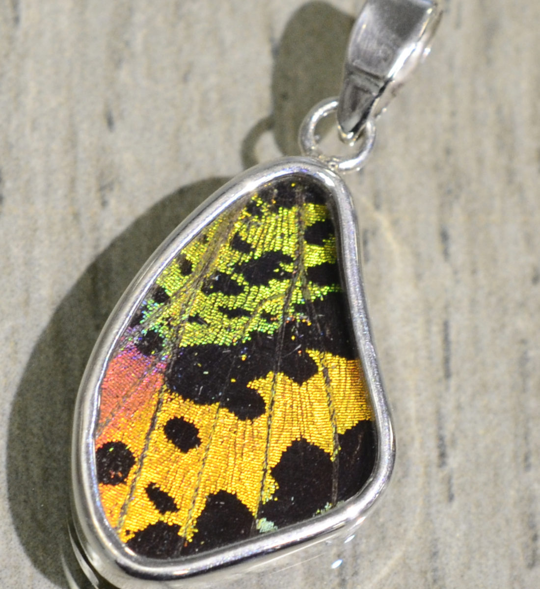 bright multicolor butterfly wing and sterling silver wing shaped pendant