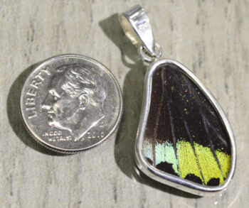 back of bright multicolor butterfly wing and sterling silver wing shaped pendant with dime