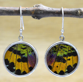 handmade multicolored real butterfly wing and sterling silver circle earrings