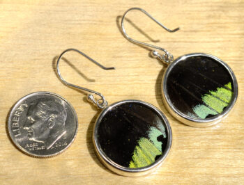 back of multicolored real butterfly wing circle earrings with dime