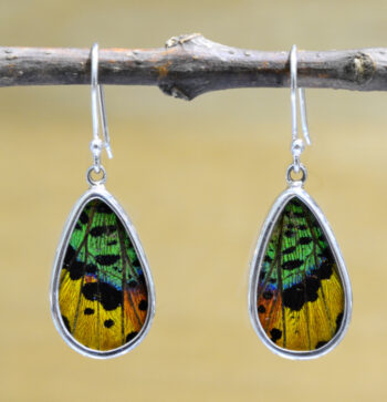colorful real butterfly wing and sterling silver drop earrings