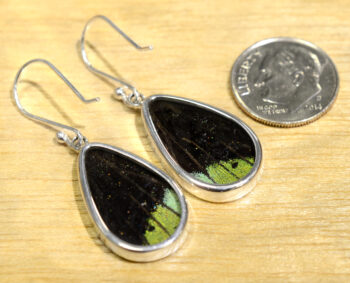 back of multicolor butterfly wing drop earrings with dime