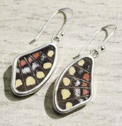 yellow swallowtail real butterfly wing earrings